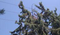 ΔΕΔΔΗΕ: Πού να απευθύνονται οι Χαλκιδικιώτες για δέντρα που ακουμπούν σε καλώδια